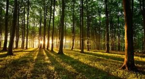 Miškai ir kt.